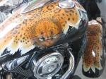 Kawasaki_-_Leopard_skin_3